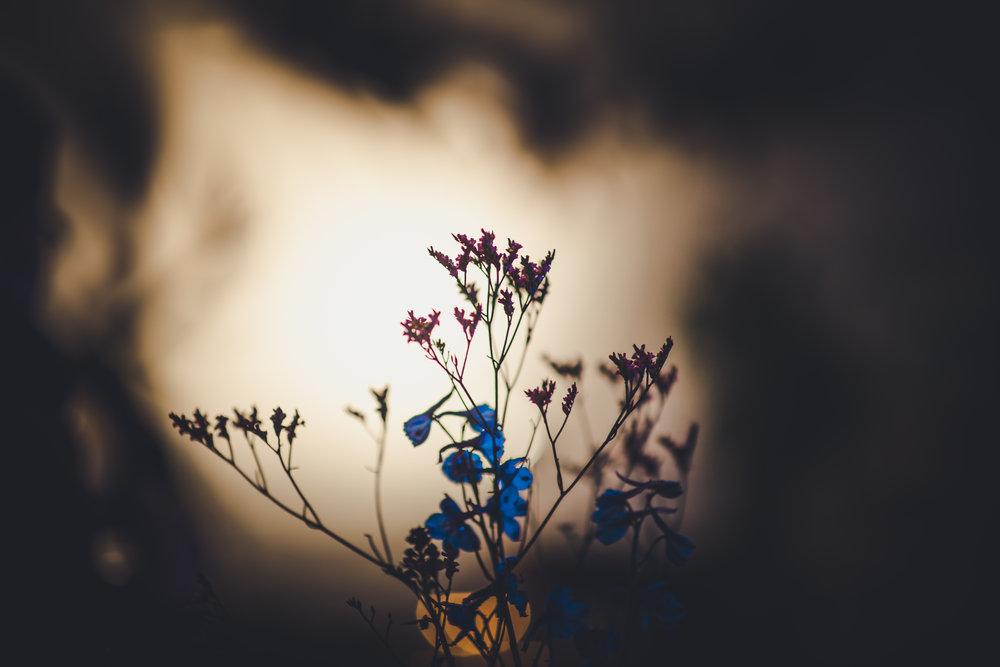 The Morning | Vincent Mockart | NSlagmolen | 18_.jpg