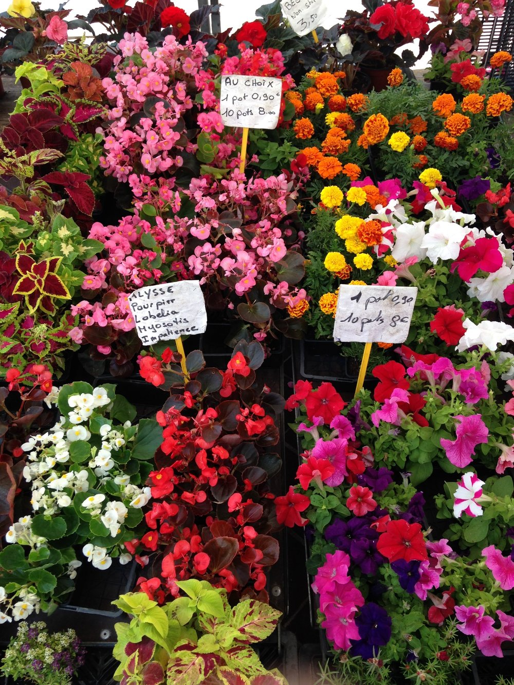 Fleurs, fleurs, fleurs