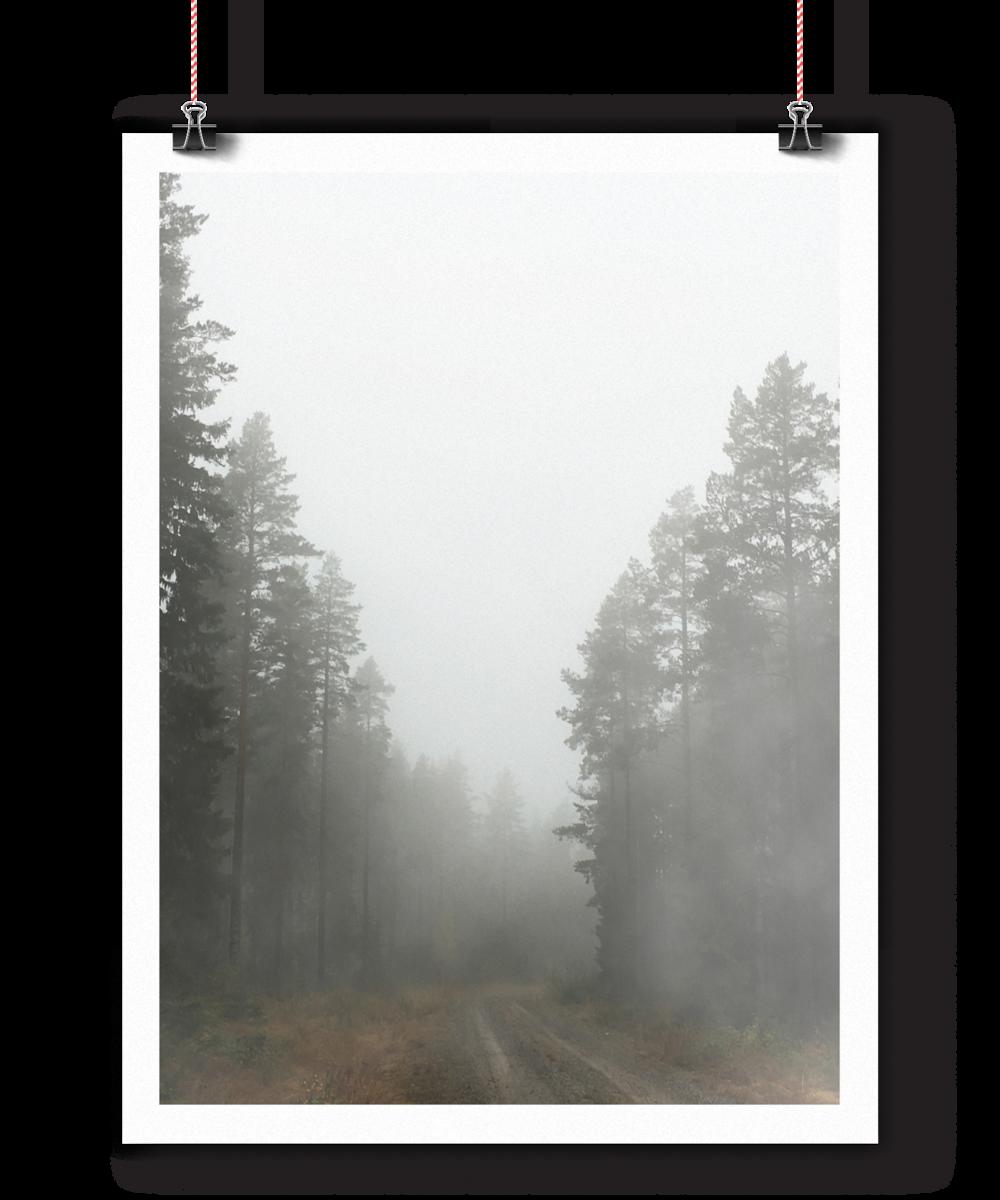 foggyforest_mockup1.png