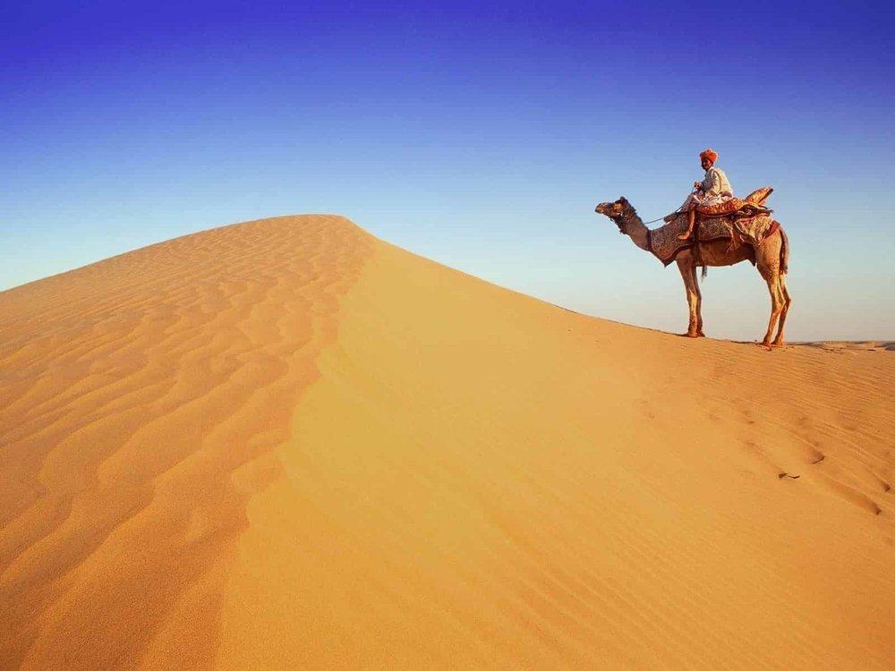 A_Rajasthan_Camel_in_Desert.jpg