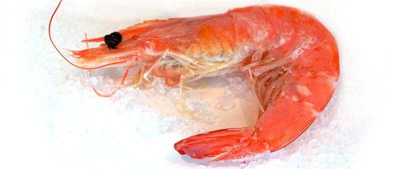 Cooked Shrimp.jpg
