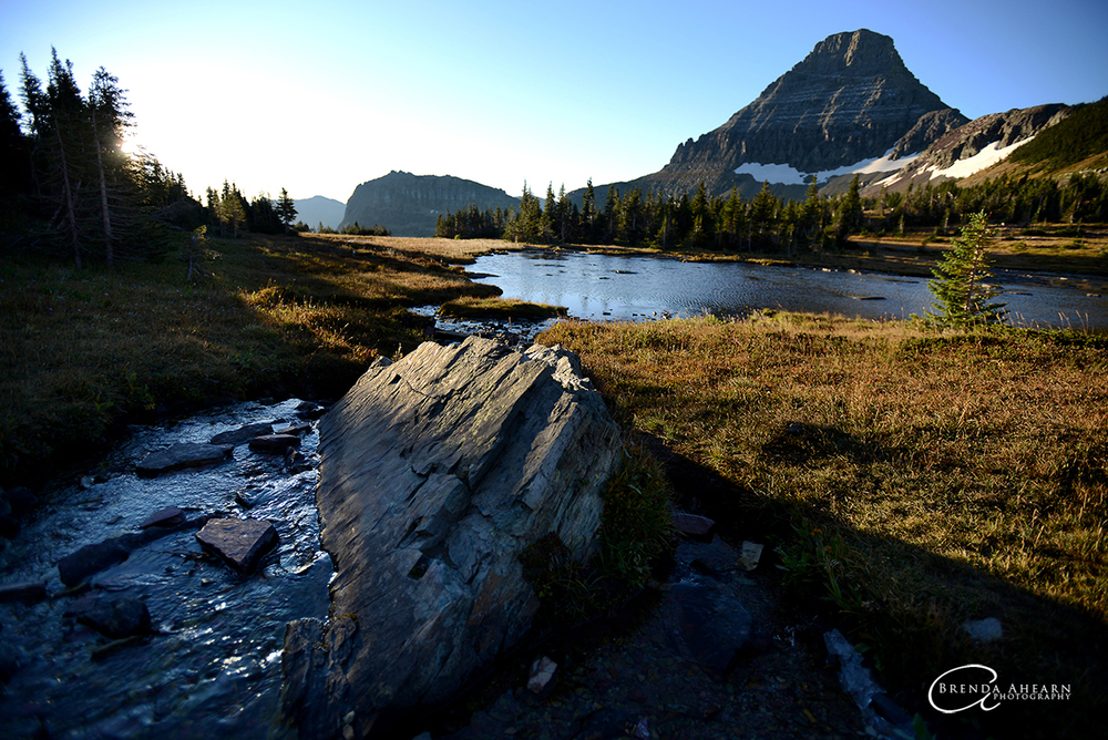 Brenda Ahearn/Daily Inter Lake A sunrise view of Reynolds Mountain over an alpine meadow on Thursday, September 13, in Glacier National Park.