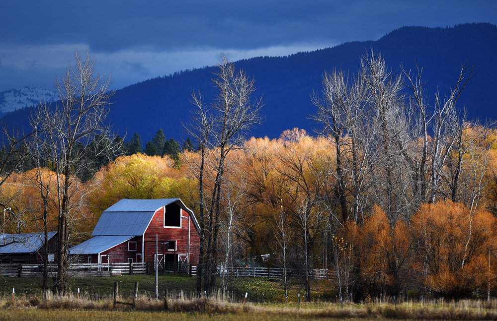 A red barn and autumn leaves make a striking contrast against the blue of the mountains on a mostly overcast morning on Wednesday, Nov. 2, in Columbia Falls. (11/2/16)
