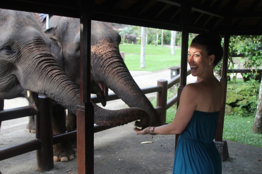 Jenny Blake - Bali Elephant