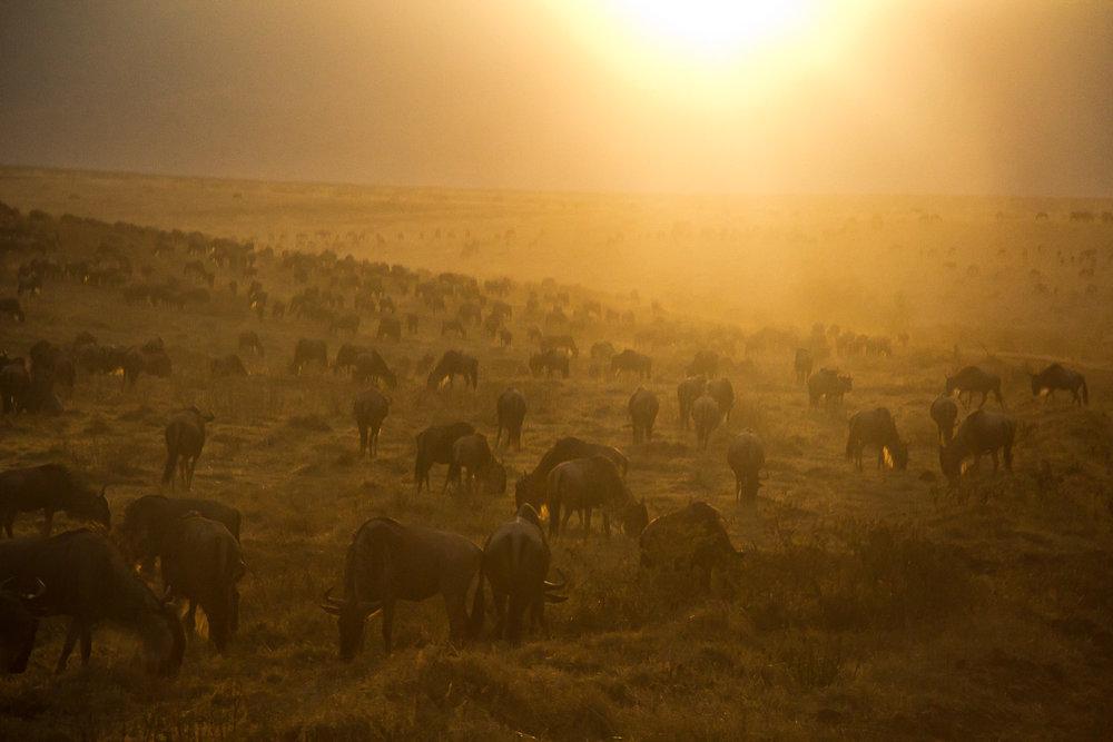 Tanzania-3176.jpg