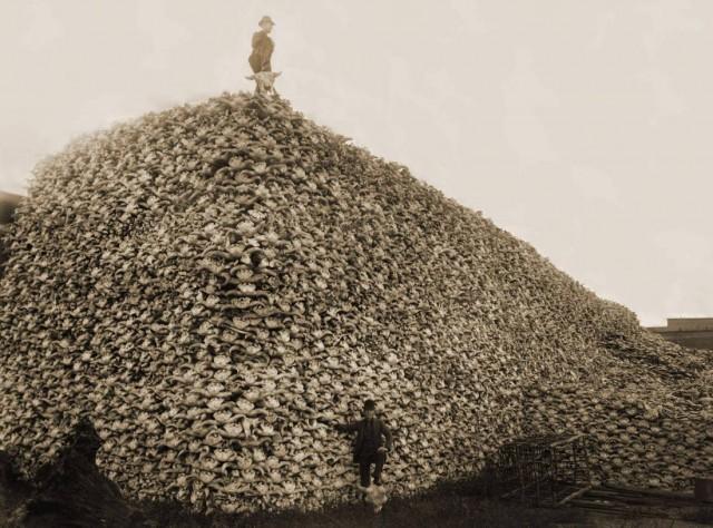 Buffalo-Skulls-1870-e1370476943363