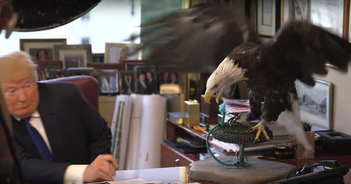 The Mighty Eagle Whisperer working his magic.