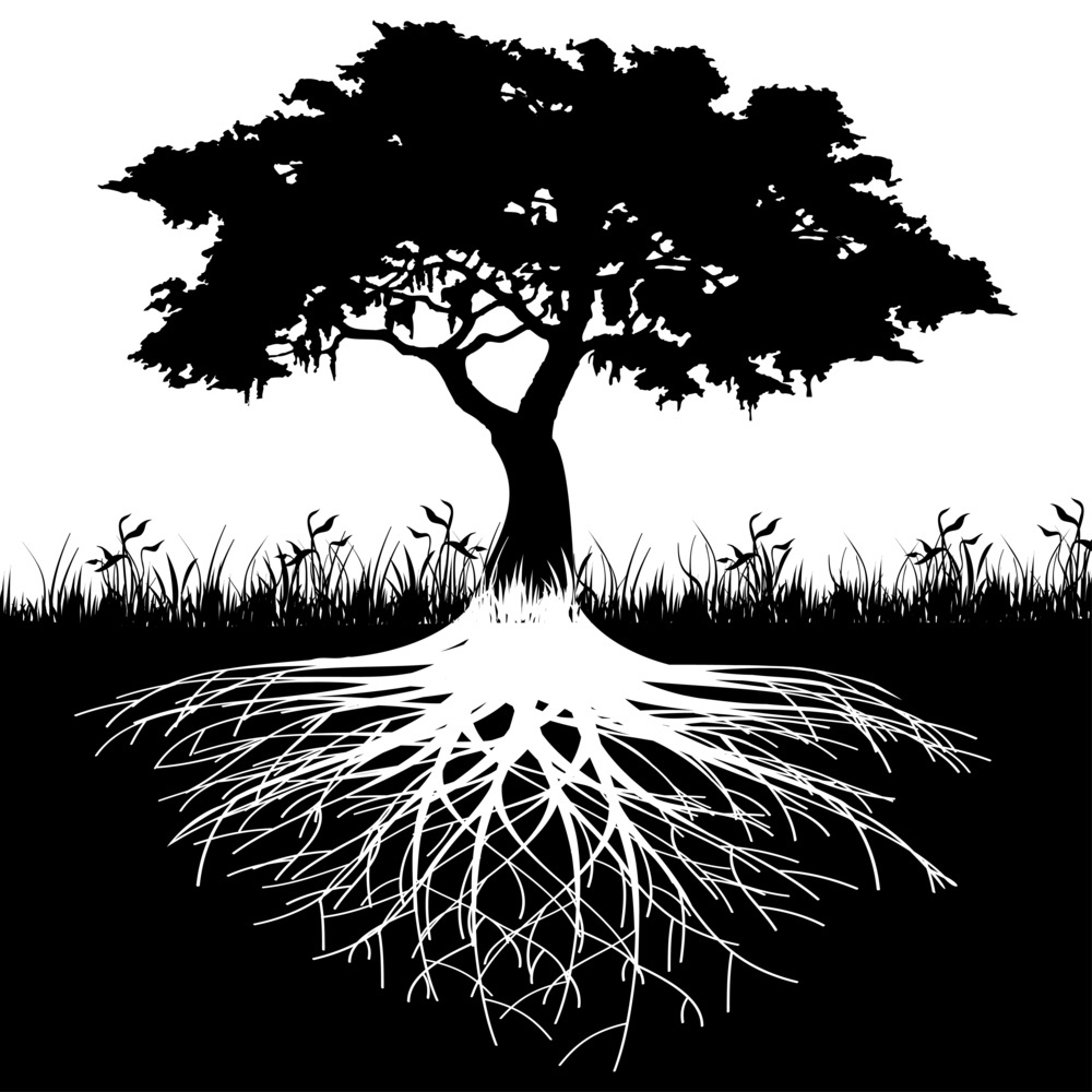 Black and white tree and roots UP.jpg