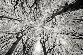 forest fractal.jpg