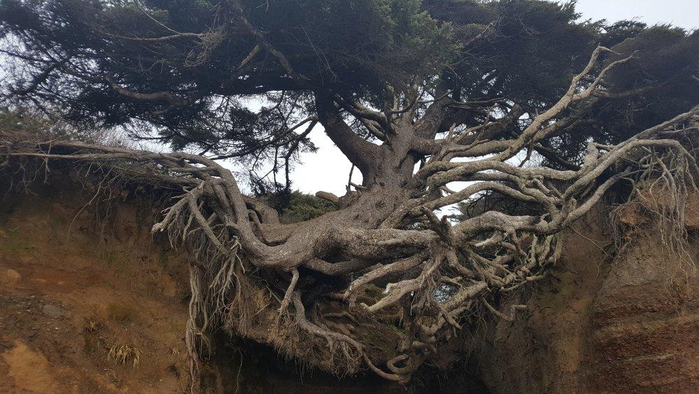 k tree.jpg