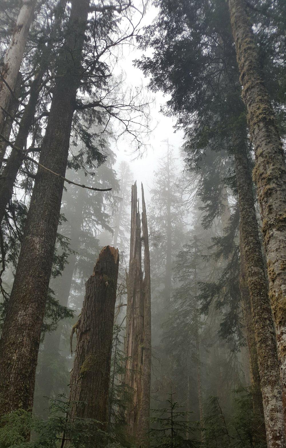 mist 2.jpg