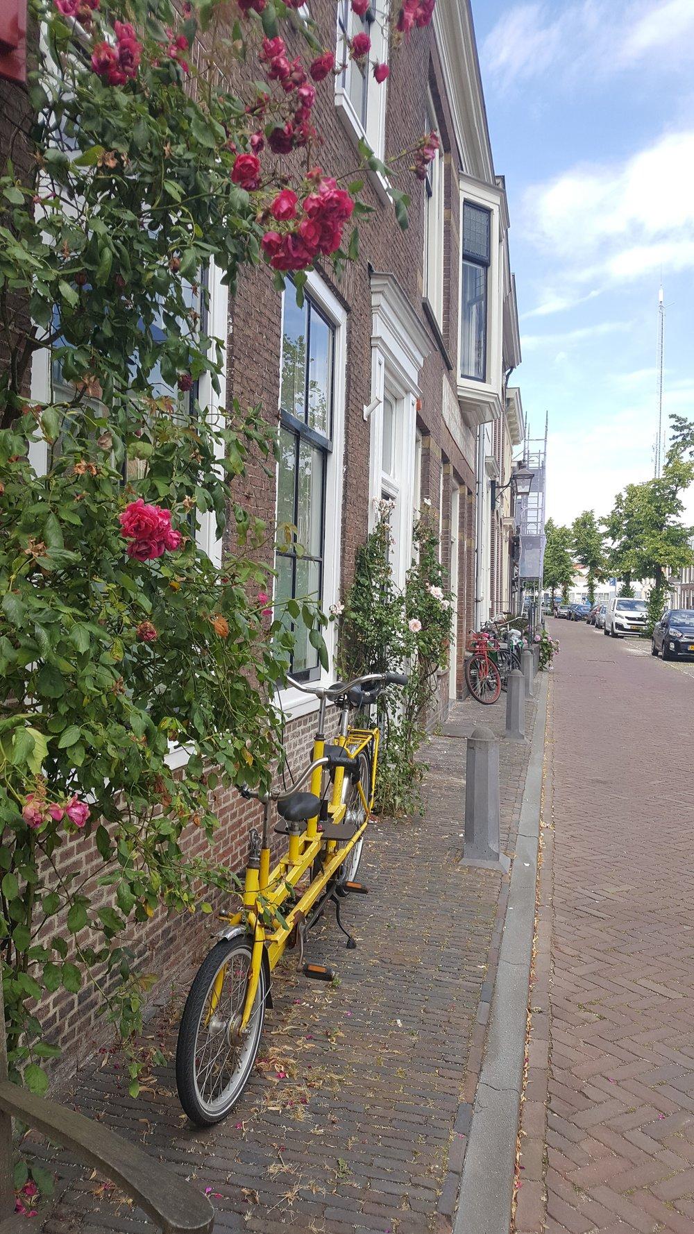 roses and bike.jpg