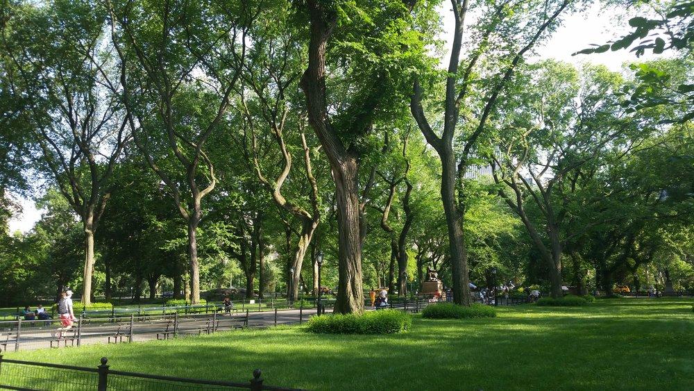 central park3.jpg