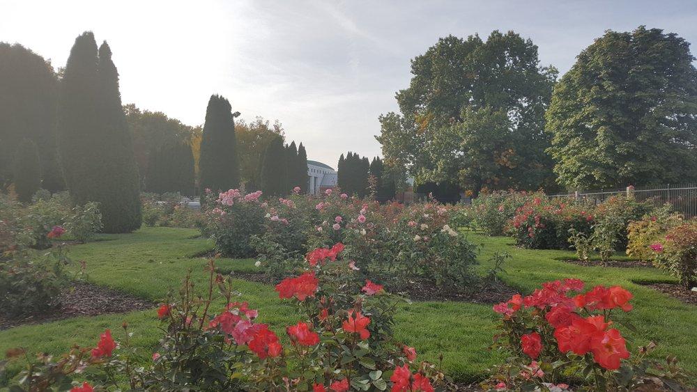 rose garden5.jpg