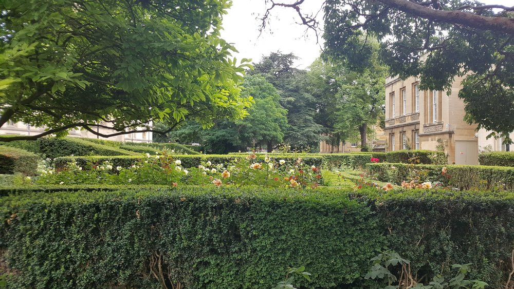 rose garden 2.jpg