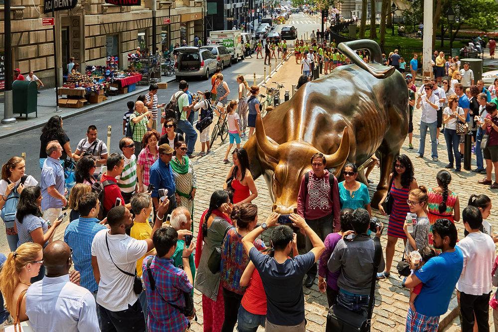 New_York_Bull_web.jpg