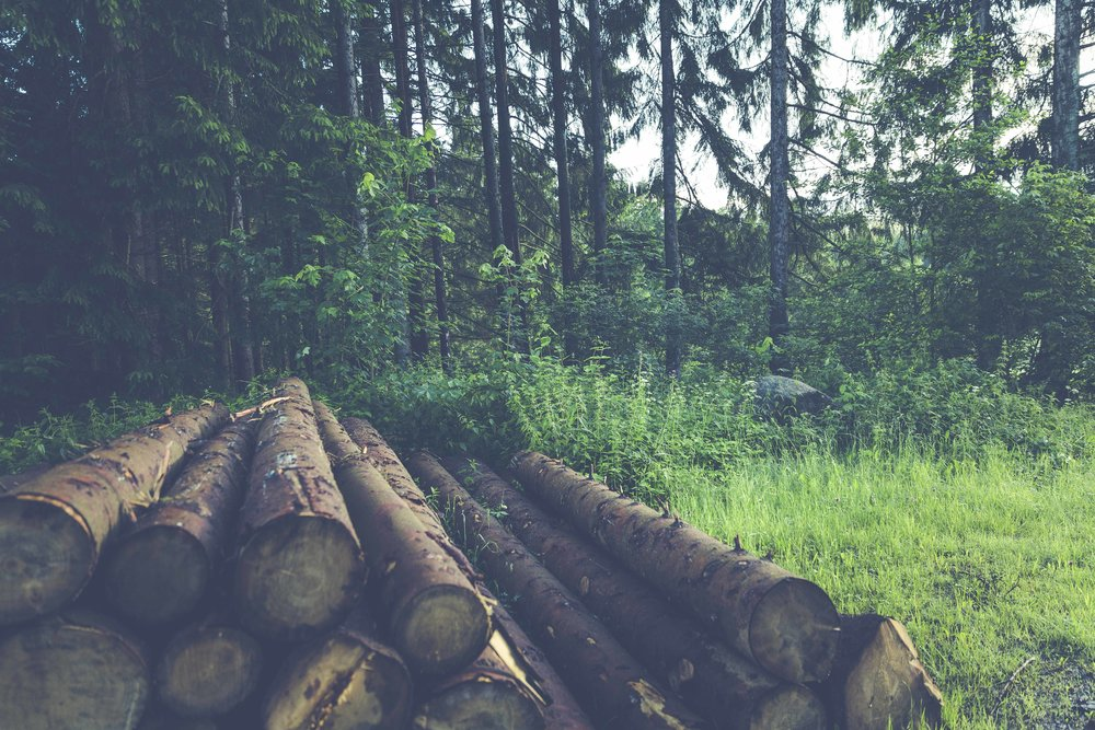 woods_low.jpg