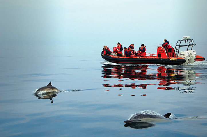 Dolphin Watching, St David's
