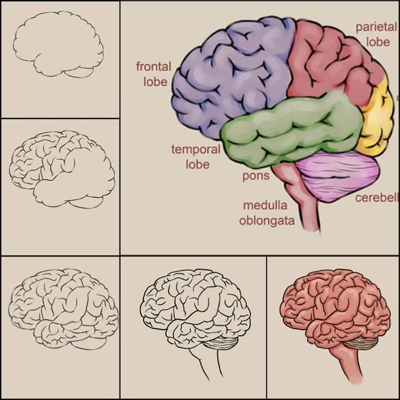 What Poverty Does To The Brain A Productive Look