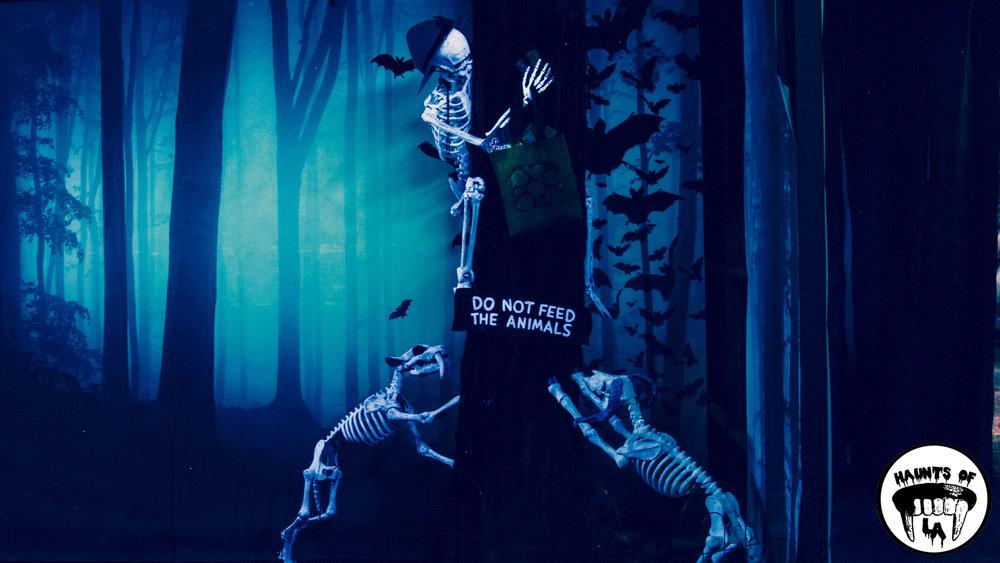 HOLA 18.10.18 Boney ISland 01.jpg