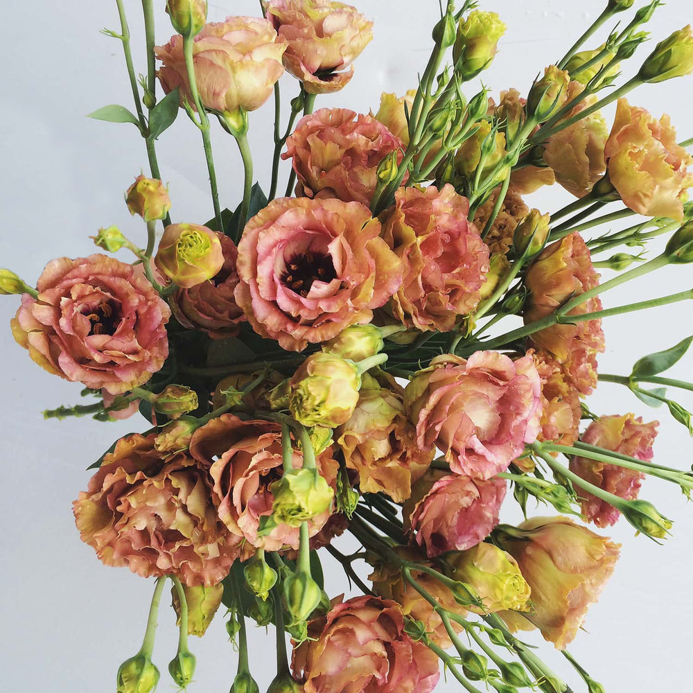 Florist in Portland uses Lisianthus flower to comtemporary floral design