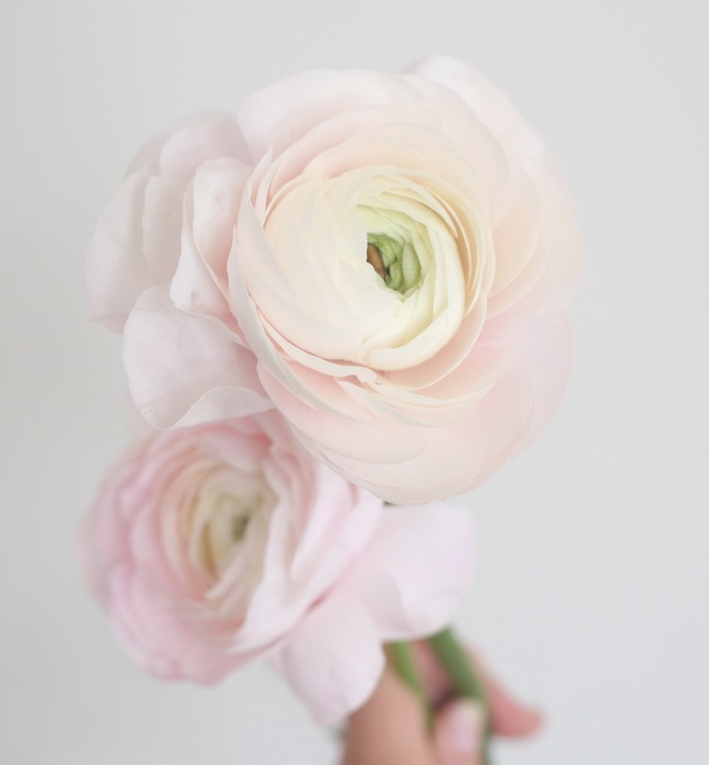 BLUSH RANUNCULUS - Ranunculus are a soft and delicate focal flower to be found in a plethora of gorgeous tones, so we utilize them a LOT. This blush color works to soften a neutral palette or to add to a soft and feminine palette. This particular variety, known as a Clooney Ranunculus, comes with a higher price tag but delivers a much larger bloom relative to standard Ranunculus.