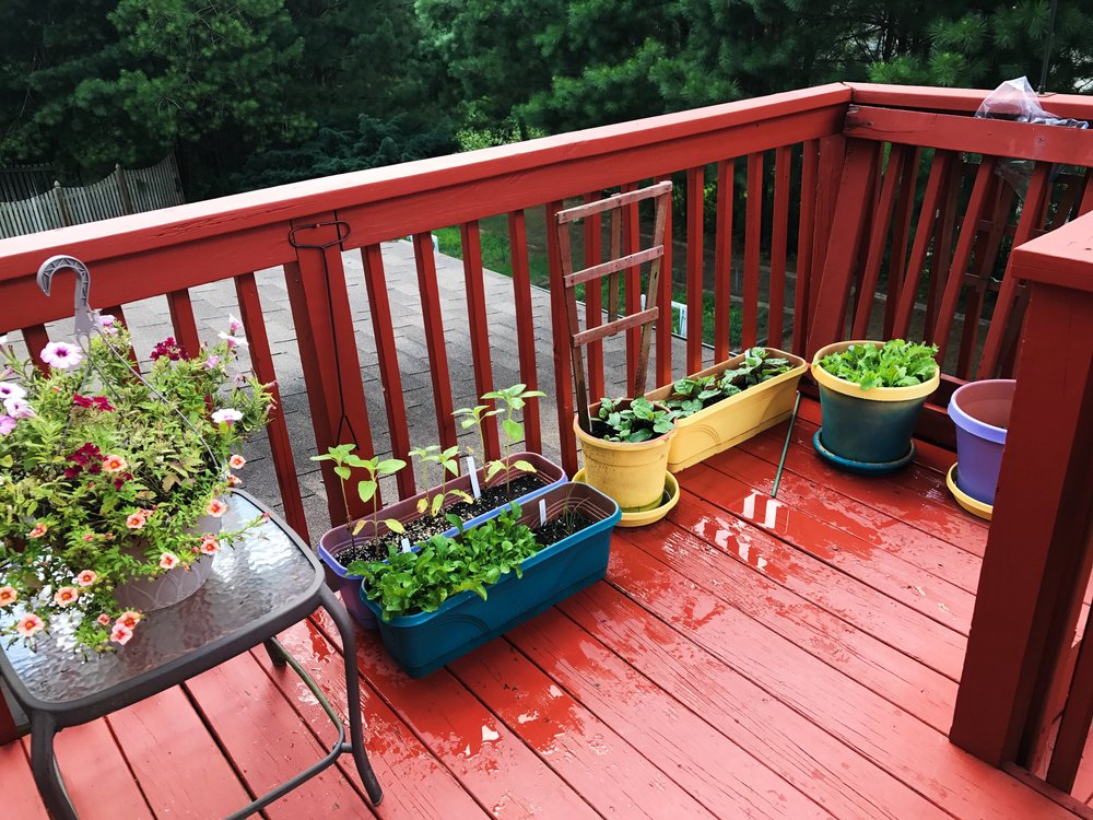 plants garden porch garden