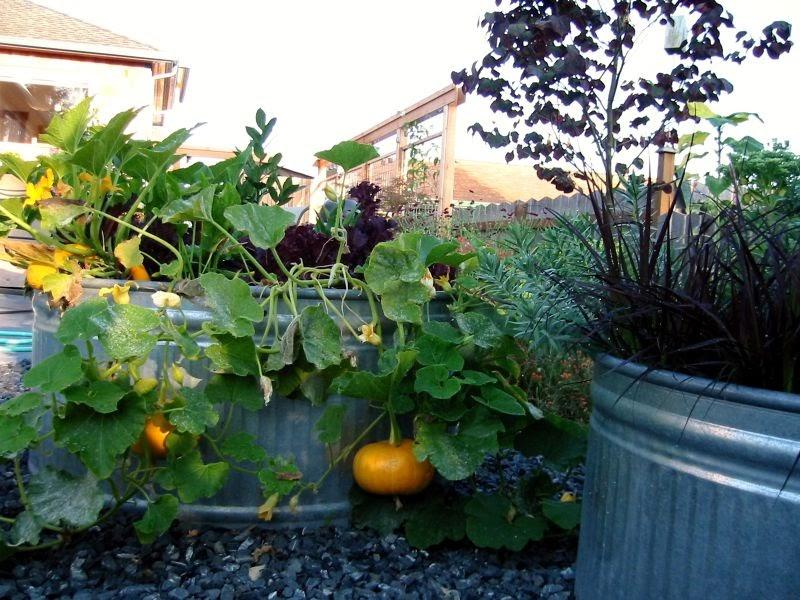 trough_garden.jpg