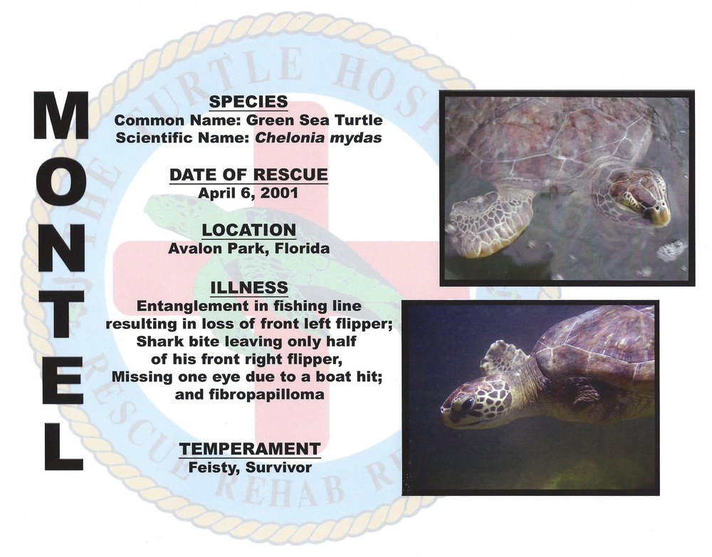 Montel the Turtle with details about his rescue.