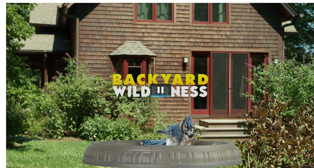 BackyardWilderness1.jpg