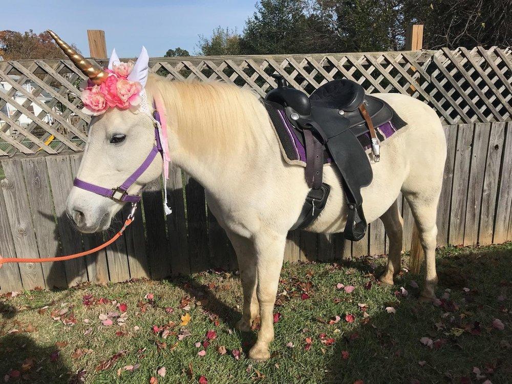 Unicorn Pony Rides