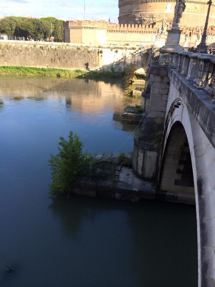 rome-tree-canal-1.jpg