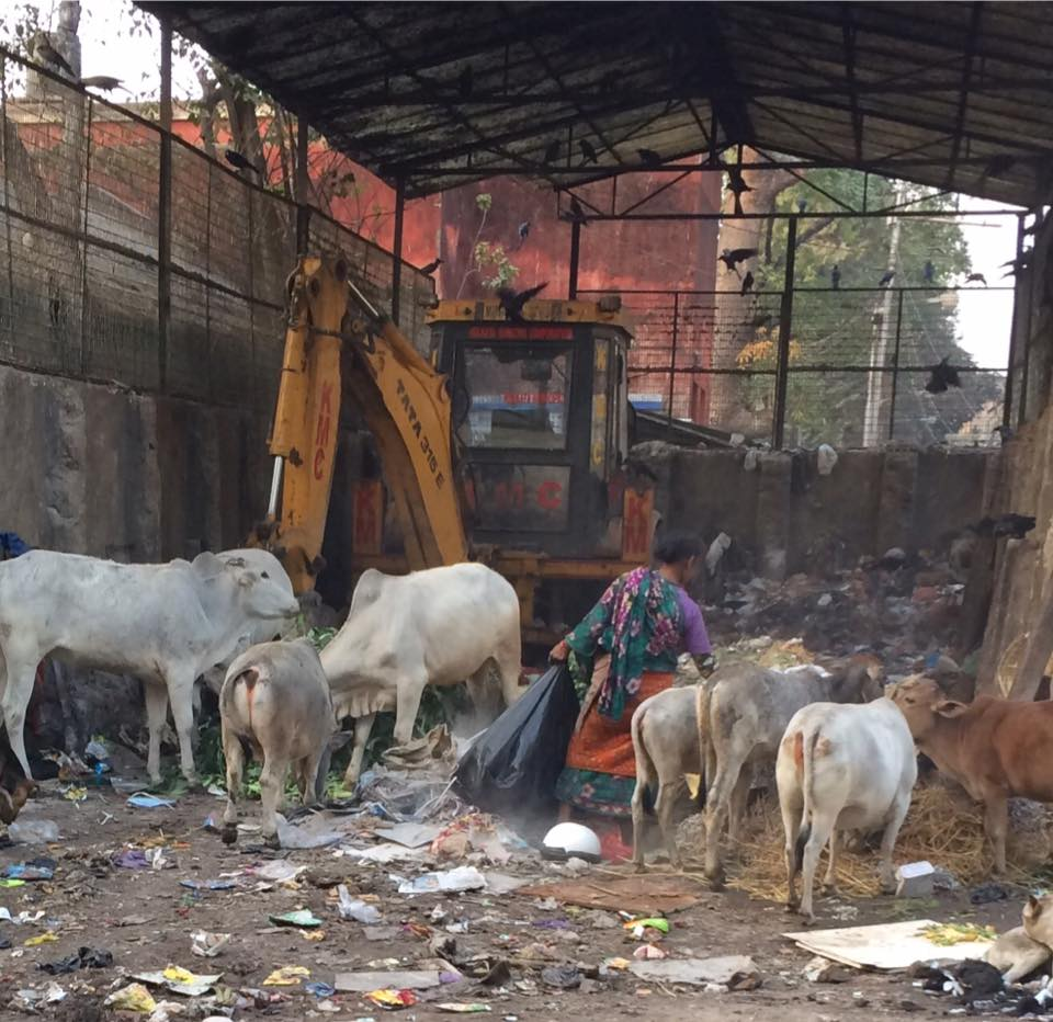 tanya-india-dump-for-cows.jpg