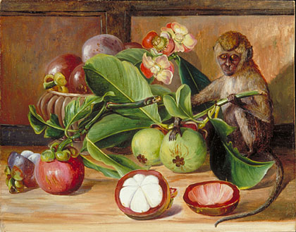 Painting 577, Flowers and Fruit of Mangosteen, and Singapore Monkey , North's collection of paintings is held at the Kew Gardens, www.kew.org