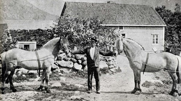 Njål to the left and another popular county stallion, Kåre, to the right.