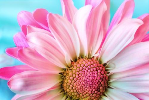 flower-3140492_1280.jpg