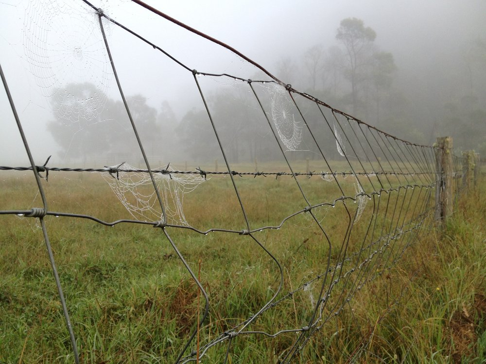 web and fence.JPG