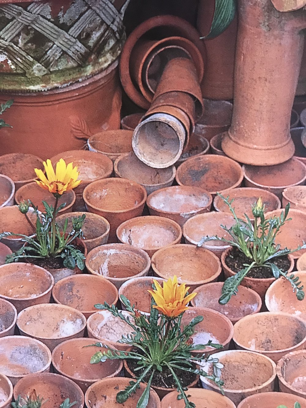 Terracotta pots in one corner