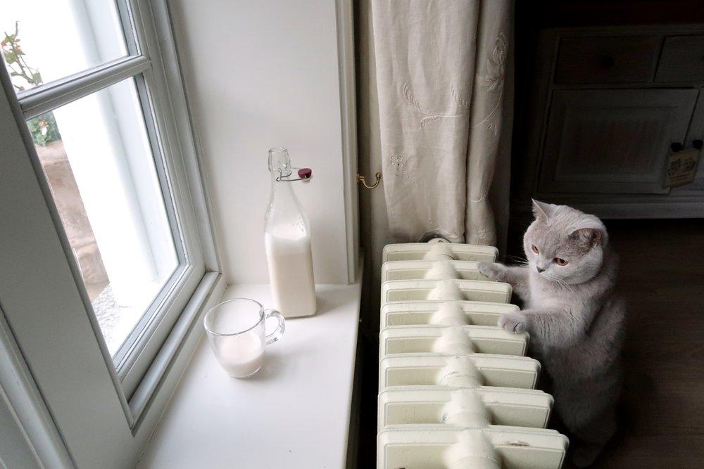 Vanilla Almond Milk, Holly White