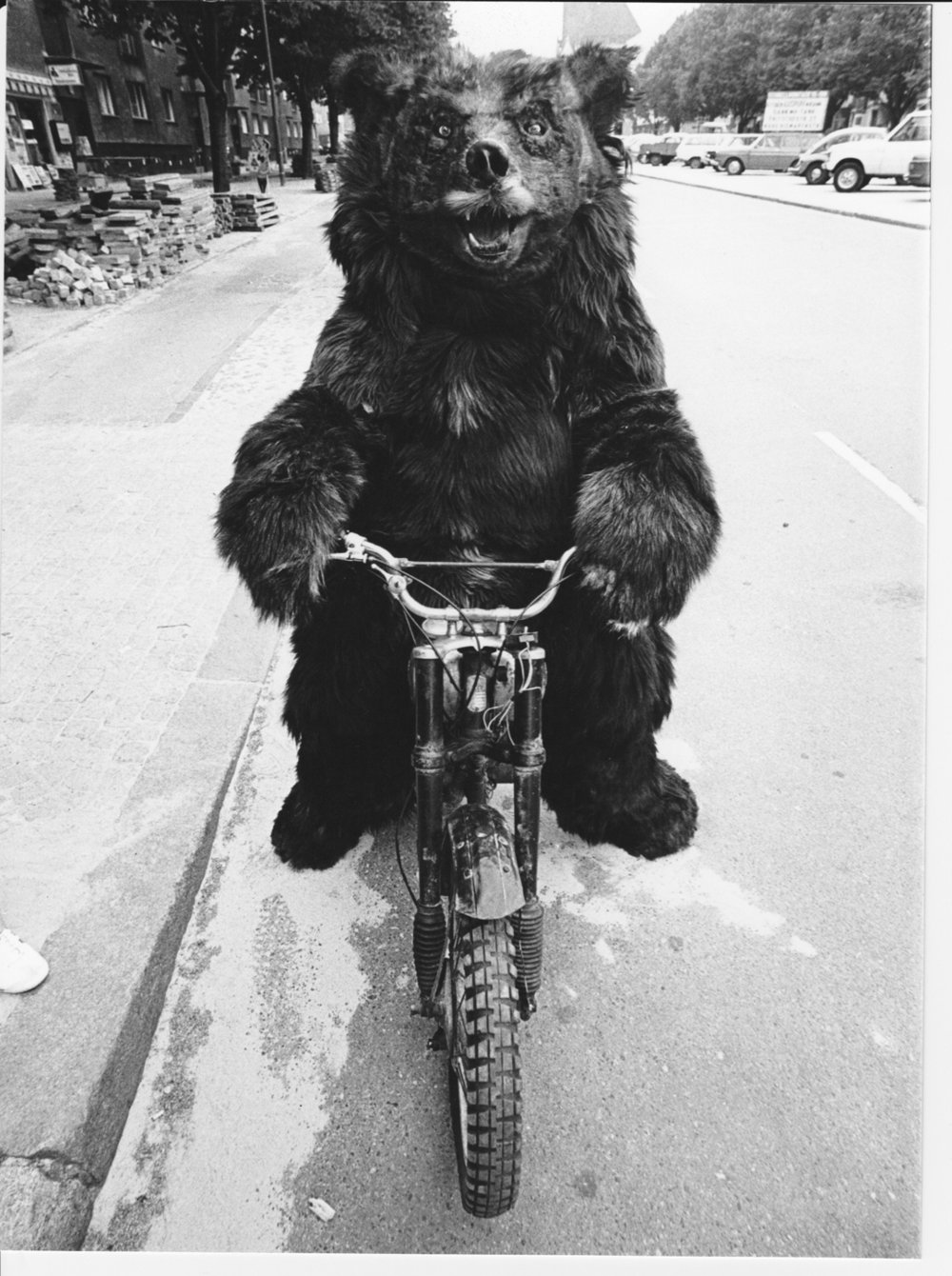 - This bear was not so stupid - not many bears can ride a motorbike.
