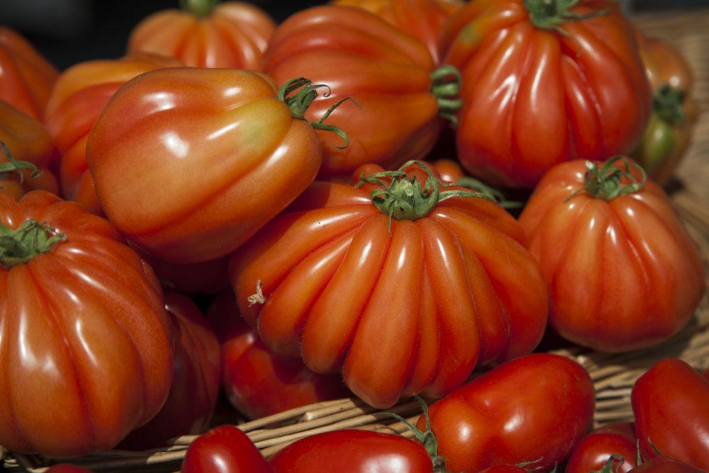 tomato large 1.jpg