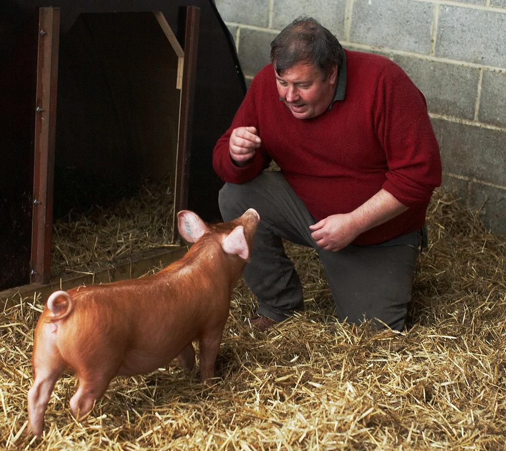 Pigs-009016-6_crop.jpg