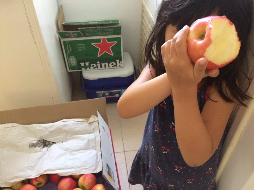 My daughter, with some of our apples and beer in the pantry.