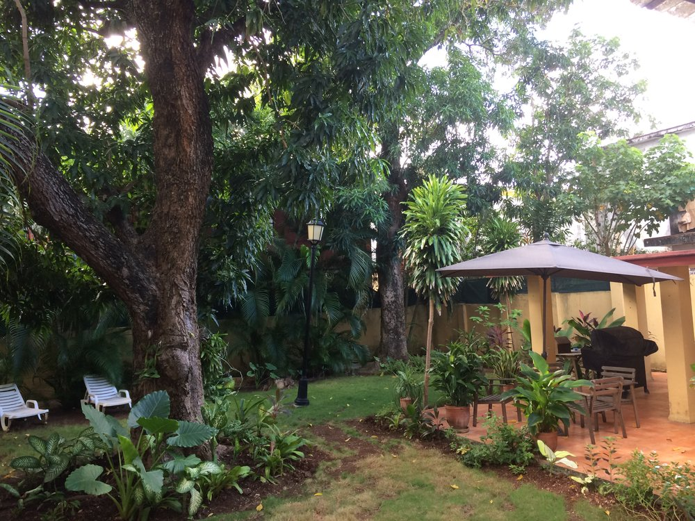 The view of my backyard from my writing desk -- the giant tree on the left nourishes us with mangoes in the summer.