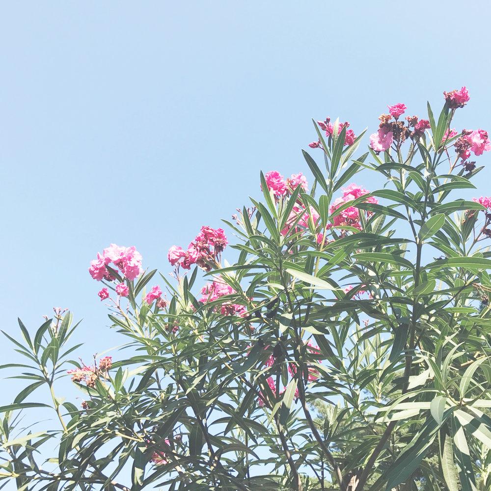 Capri 2.jpg