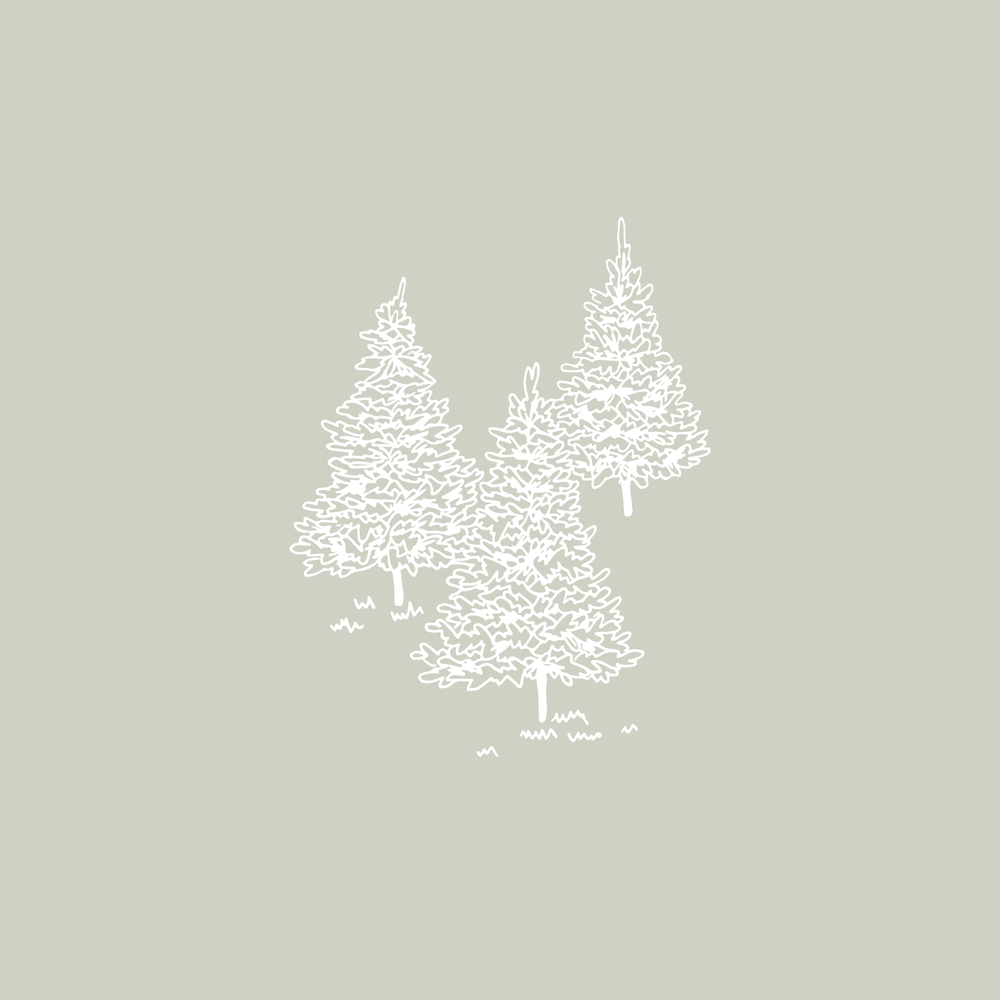 #the100dayproject forest trees illustration Bea & Bloom | Creative Design Studio