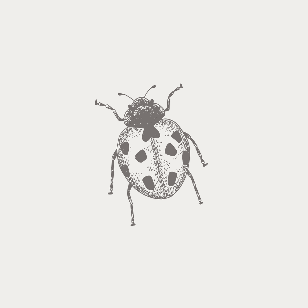 #the100dayproject ladybug ladybird illustration Bea & Bloom | Creative Design Studio