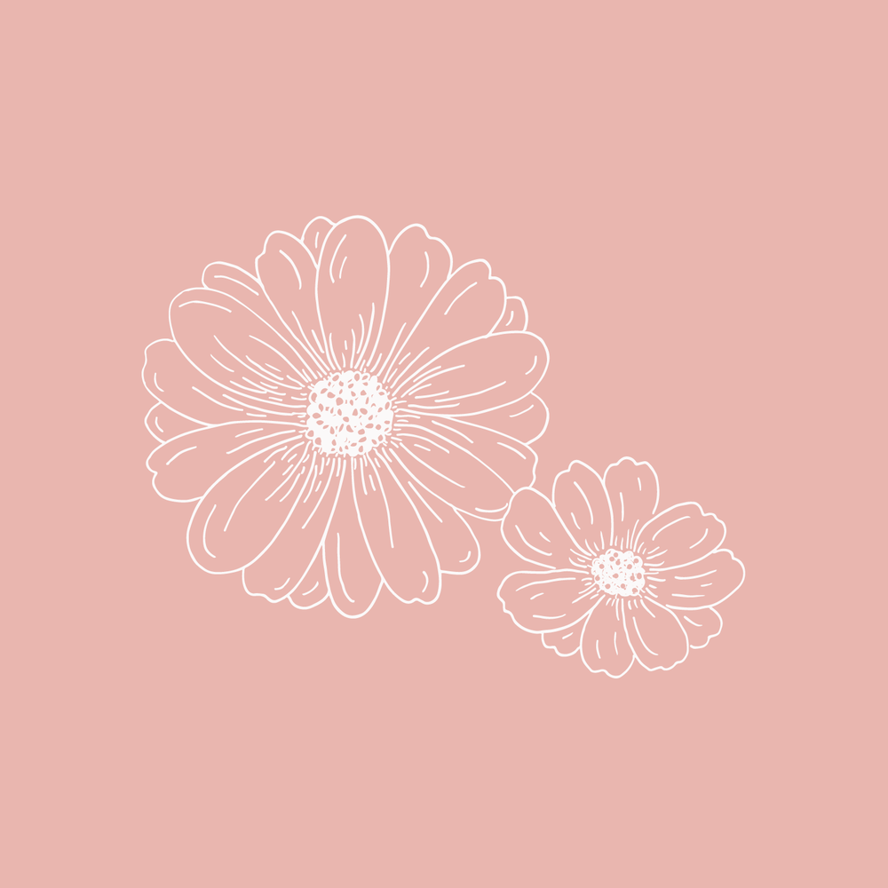 Daisy illustration - The Language of Flowers - Bea & Bloom Creative Design Studio