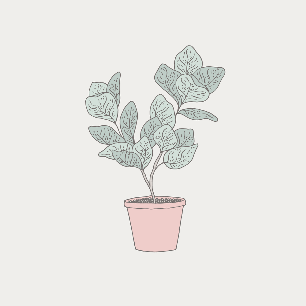 Potted plant illustration - Bea & Bloom Creative Design Studio