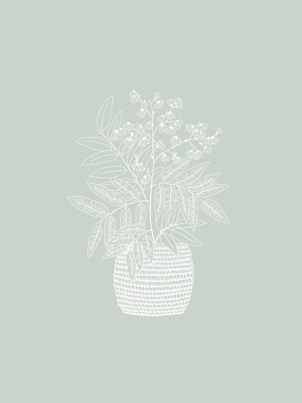 Bea & Bloom Creative Design Studio - 52 Weeks of Plants Illustration